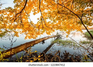 Wooden log hanging over a lake in the fall with golden autumn leaves above