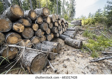 Wooden logs in the forest after the deforestation