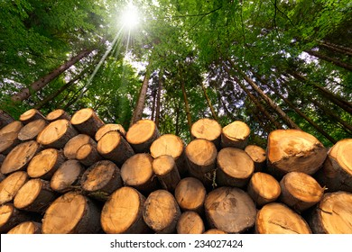 Wooden Logs with Forest on Background / Trunks of trees cut and stacked in the foreground, green forest in the background with sun rays