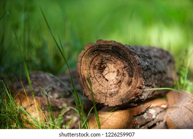 wooden logs in a meadow with grass