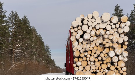 Wooden logs in pile. Firewood stacked log. Sawed tree logs trunk. Cut tree slice log cross section texture. Wood forest log pattern background. winter wooden logs. Logs on the truck.