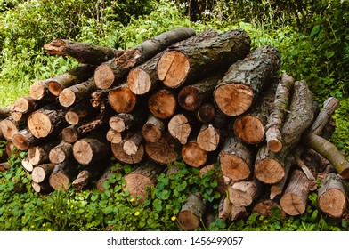 Wooden logs of pine woods in the forest. Freshly chopped tree logs stacked up on top of each other in a pile.