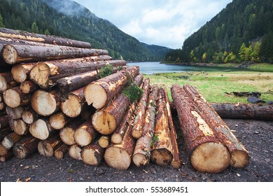 Wooden logs of pine woods in the forest, stacked in a pile in Dolomites. Freshly chopped tree logs stacked up on top of each other in a pile.