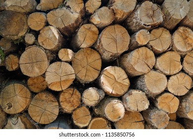 Wooden natural cut logs textured background, cut Lumber woodpile for forestry industry. Lumber, firewood, timber.