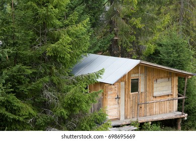 wooden one-storey house in high coniferous forest. Vintage. Nature.