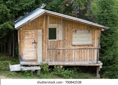 wooden one-storey house in high coniferous forest. Vintage. Nature. Front view.
