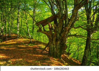 A wooden outpost built in a tree house style. The outpost is located in a wild forest deep into Lotru Mountains.