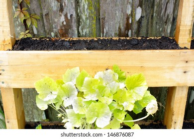 A wooden pallet, modified slightly to grow vegetable plants.