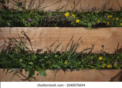 Wooden pallet planks with grass and wild flowers, copy space background