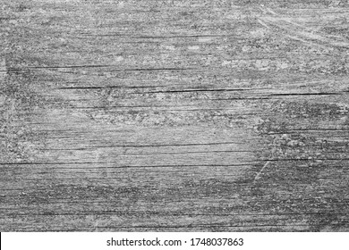 Wooden Panel Black / White Texture Close-Up Macro Background Structure - Wallpaper