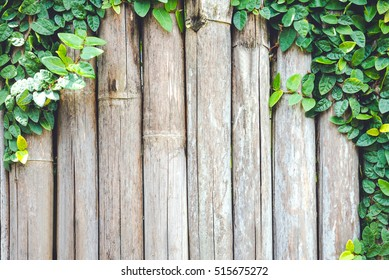 wooden panels with ivy growing
