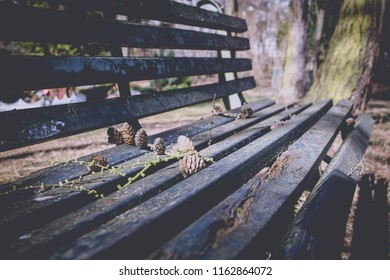 Wooden Park Bench with pine tree cones