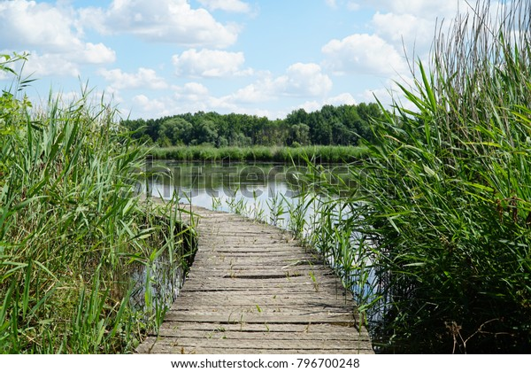 Wooden path across the lake cutting through tall grass