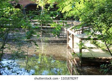 A wooden path around a pond