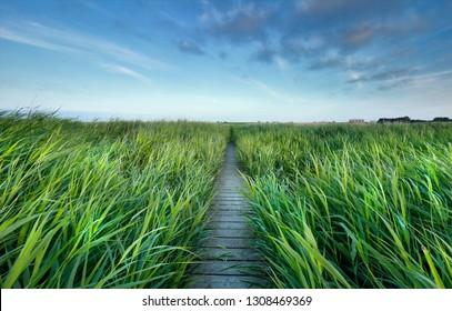 wooden path between high green grass and blue sky