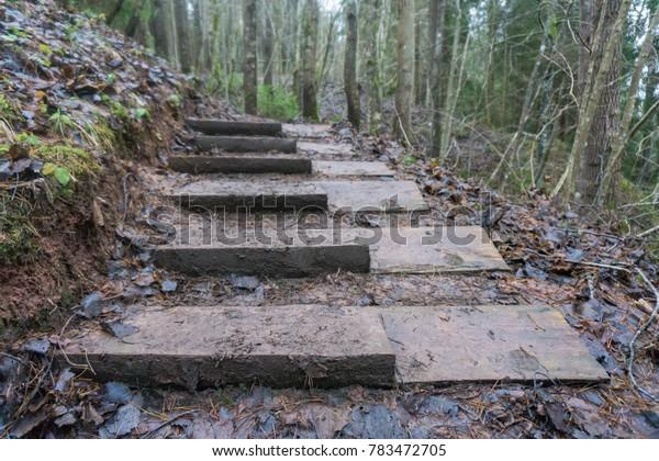Wooden path in dark rainy forest