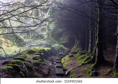 Wooden path in a dark way with trees without leaves and some fog in Wicklow way, County Wicklow, Ireland.