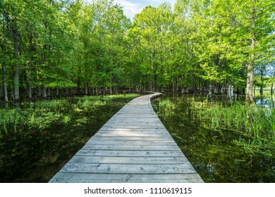 Wooden Path in forest