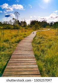 wooden path into swamp in russia