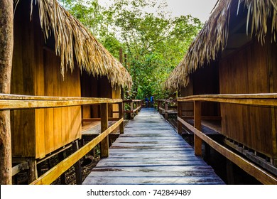 A wooden path in a jungle lodge surrounded by the green lush vegetation of the amazon rainforest in brazil, south america