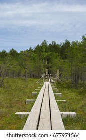 Wooden path in Kemeri National Park
