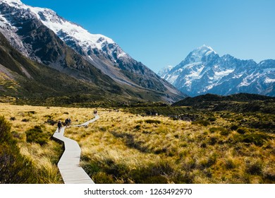 Wooden path leading across tussock to Mt Cook
