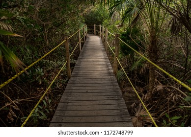 wooden path over river and through mangrove
