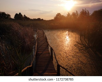 Wooden path over the swamp at summer sunset