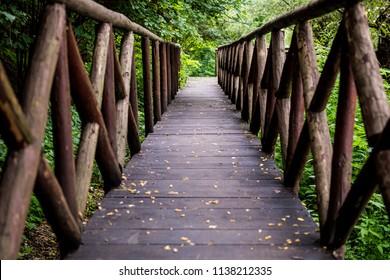 Wooden path thru vegetation