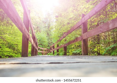 Wooden path in the urban forest. The concept of solitude, walks in nature. Green tones, bright sun. Place for text, background image.