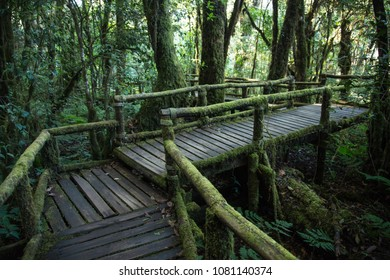 The wooden pathway in Angka Nature Trail in Inthanon with tree trunks covered in moss