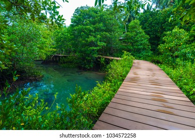 Wooden pathway into the mangrove jungle in Krabi, Thailand