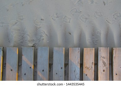 wooden pathway and seagull footprints on the sand
