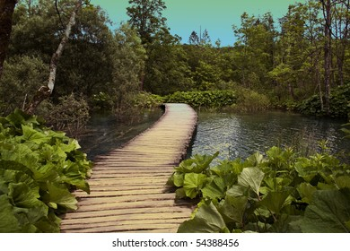 wooden pathway in spring forest