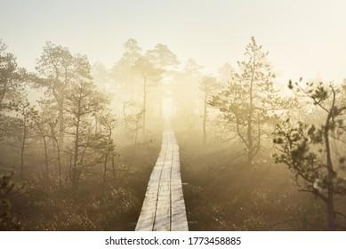 Ein hölzerner Steg durch den Nadelwald in einem dicken geheimnisvollen Nebel bei Sonnenaufgang. Cenas tirelis, Lettland. Sonnenlicht durch die alten Baumstämme. Idyllische Herbstlandschaft. Naturtunnel, Märchenlandschaft