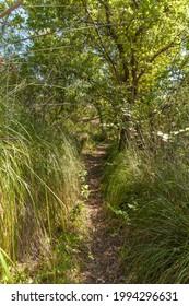 Une allée en bois dans la forêt de chênes
