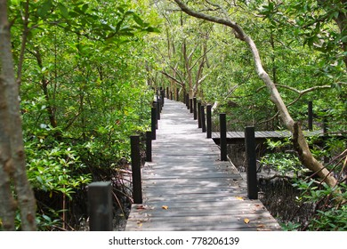 Wooden pavement in the mangrove forest, evergreen place with high abundant of many organism