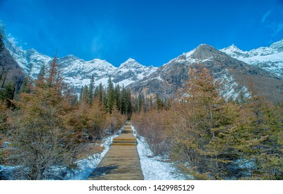 Wooden pavement for walking on the background of snow and winter forest, the way up to the viewpoint on the snow mountain