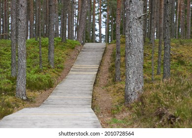 wooden pedestrian bridge over forest, over forest and pond path way pedestrians of stumps adventure, educational in nature. Selective focus. High quality photo
