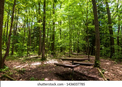 A wooden picnic table in the woods in Warren County, Pennsylvania, USA on a sunny summer day