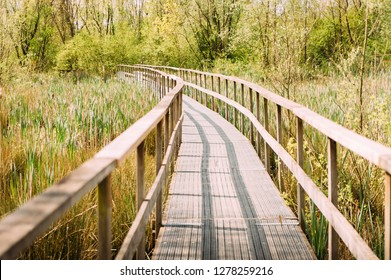 Wooden pier in countryside over low marsh going toward woods in the outdoor, expressing feeling of serenity and future path