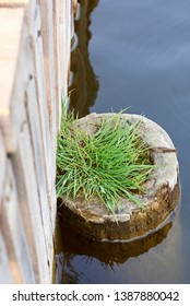 Wooden pier and peg sticking out of the water, from which grass grows, on the calm lake