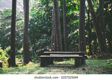 Wooden pine bench at pine forest TERAP, MALAYSIA