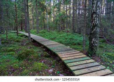 wooden plank boardwalk in swamp area in autumn in perspective. forest nautre trails for tourists and education in Latvia. long exposure