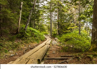 Wooden plank path through the woods that surround Jordan Pond in Acadia National Park in Maine.