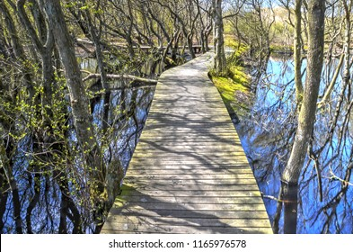 Wooden plankbridge crossing a pond from which shrubs are growing in the Vogelkoje area on the German Northsea island of Amrum
