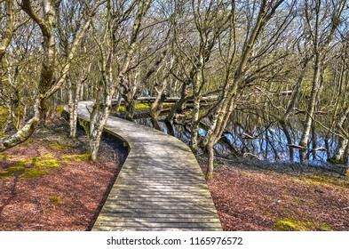 Wooden plankbridge meandering between shrubs, bushes and ponds in the Vogelkoje area on the German Northsea island of Amrum
