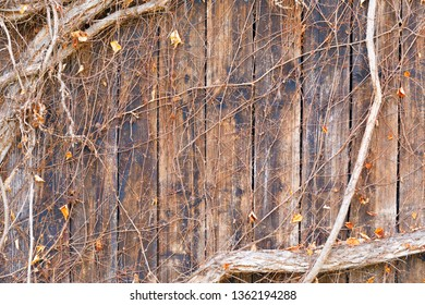 wooden planks covered by branch of woodbine