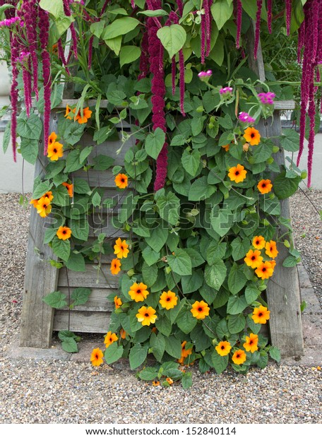 wooden planter with late summer flowers