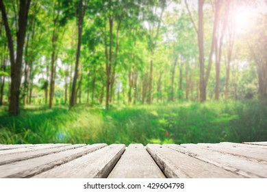 Wooden plate on Burmese Ebony tree forest background